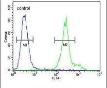 ANKFY1 Antibody (PA5-24640)