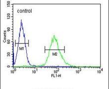 ARHGAP17 Antibody (PA5-24250)