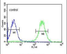 ARSI Antibody (PA5-26916)
