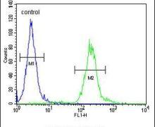 AVPI1 Antibody (PA5-24008)