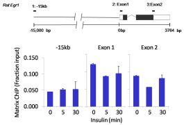 Acetyl-Histone H3 (Lys9) Antibody (701269)