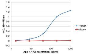 Apolipoprotein A1 Antibody (MIA1402)