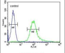 B3GNT4 Antibody (PA5-24189)
