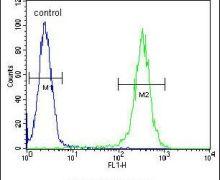 B4GALT5 Antibody (PA5-25282)