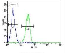 B4GALT6 Antibody (PA5-24190)