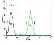BCKDHB Antibody (PA5-24166)