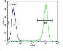 Bcl-10 Antibody (PA5-24191)