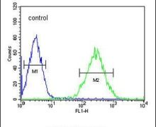 PDH Antibody (PA5-25466)