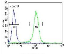 BHLH3 Antibody (PA5-25651)