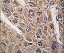 BICD2 Antibody (PA5-14858)