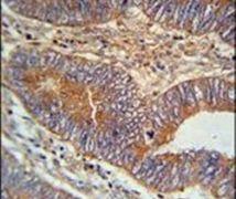 BIN2 Antibody (PA5-25681)