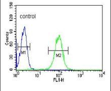 BPI Antibody (PA5-26069)