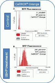 Detection of Oxidative stress using CellROX® orange and Tali® Image-Based Cytometer