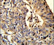 TSPEAR Antibody (PA5-26283)