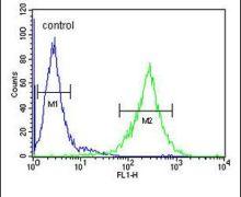 TEX37 Antibody (PA5-24532)