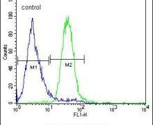 C5AR1 Antibody (PA5-24194)