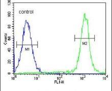 C1orf26 Antibody (PA5-24460)