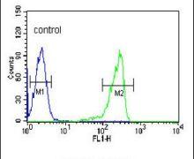 Calpain 3 Antibody (PA5-26818)