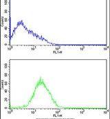 Caspase 2 Antibody (PA5-11407)