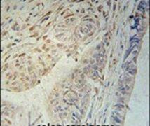 CCD92 Antibody (PA5-24939)