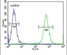 CCDC148 Antibody (PA5-24107)