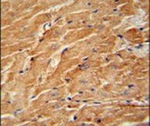 CCL21 Antibody (PA5-23643)