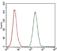 MCP-1 Antibody (MA5-17040)