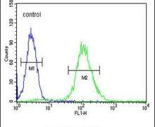 Cyclin G1 Antibody (PA5-24422)