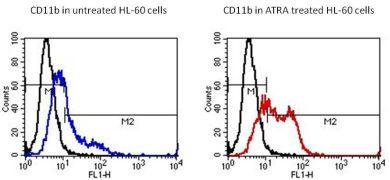 CD11b Antibody (MA1-19004)