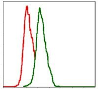 ITGB1 Antibody (MA5-17103)
