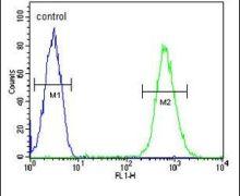 CD37 Antibody (PA5-24204)