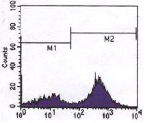 CD3z Antibody (MA5-15233)