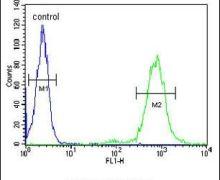 CD69 Antibody (PA5-25328)