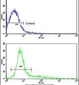 CD9 Antibody (PA5-11556)