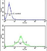 Cdc20 Antibody (PA5-26145)