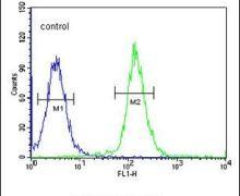 Cdc45L Antibody (PA5-26878)