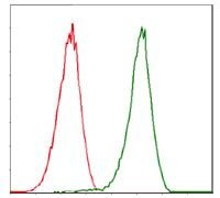 CDK2 Antibody (MA5-17052)