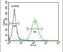 CES2 Antibody (PA5-24157)