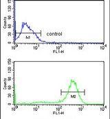 CHPF Antibody (PA5-26056)
