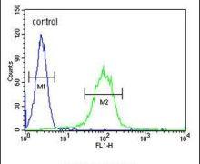 CHST2 Antibody (PA5-24197)