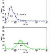 CLASP2 Antibody (PA5-23922)