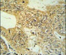 Claudin 23 Antibody (PA5-26831)