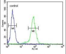 Claudin 8 Antibody (PA5-26231)