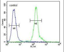 CD301 Antibody (PA5-24058)