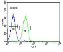 CD300f Antibody (PA5-26947)