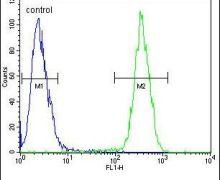 CLPX Antibody (PA5-24256)