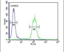 Apolipoprotein J Antibody (PA5-24426)