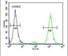 CNPY2 Antibody (PA5-26952)