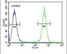 COL17A1 Antibody (PA5-26108)