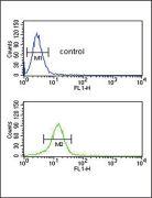 COL5A2 Antibody (PA5-14245)